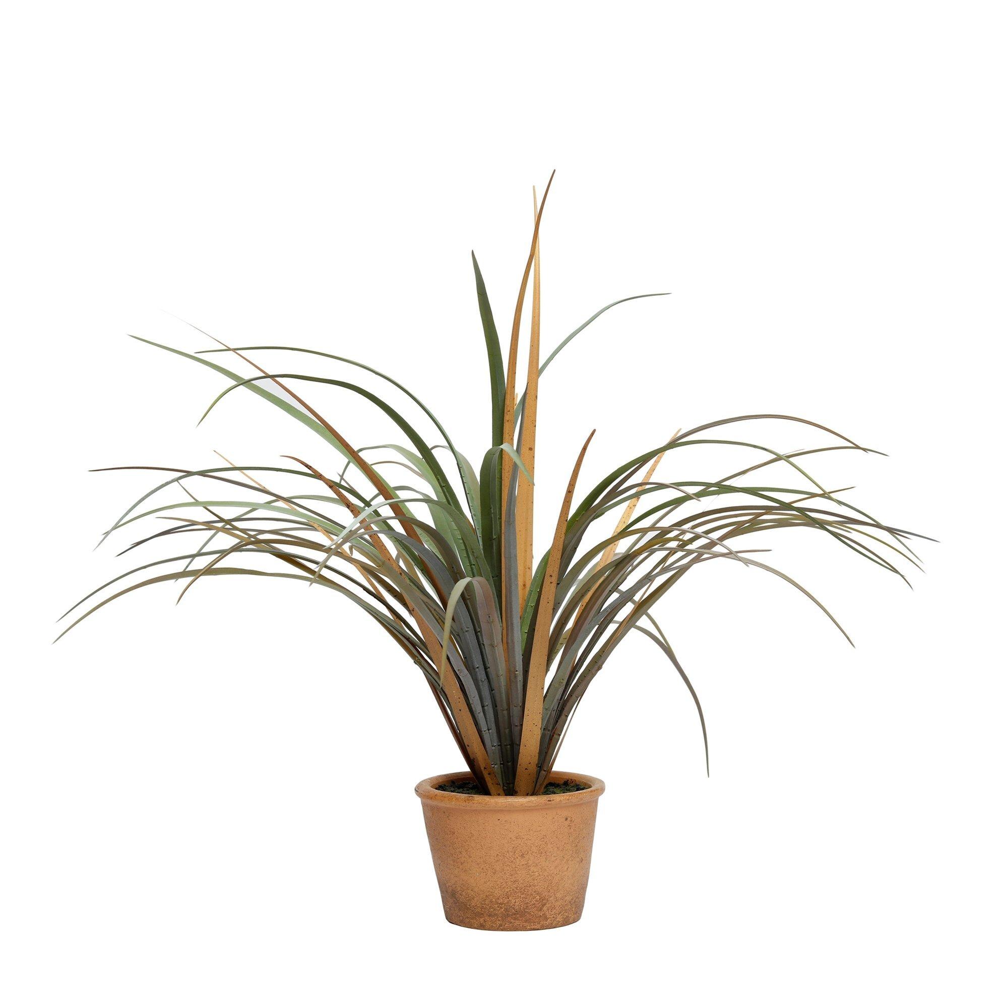 Dekoratif Bitki (66x52cm)