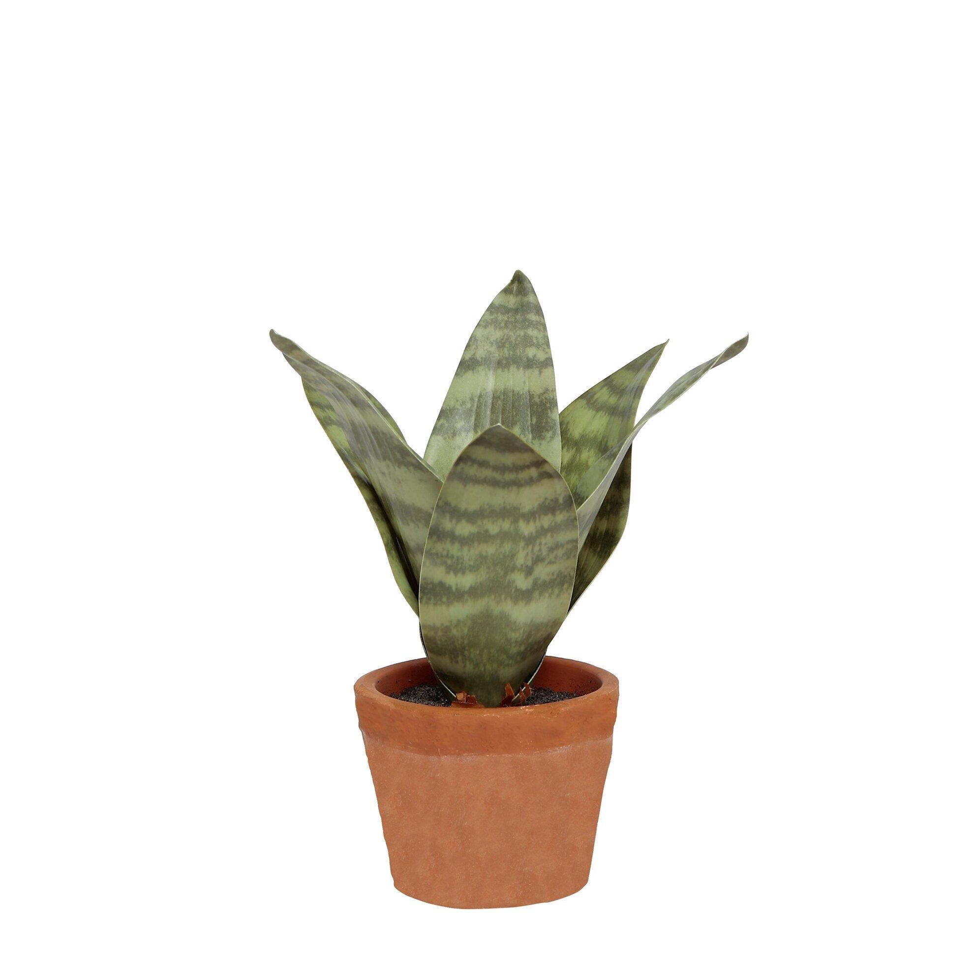 Dekoratif Bitki  (9x20cm)