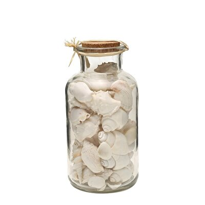 Seemuschel Dekorativ Beherglas ( 23 Cm )