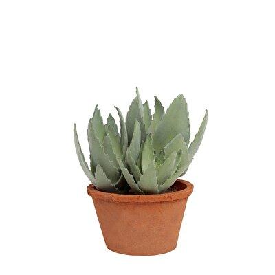 Saksı Bitki ( 16  X  24 Cm )