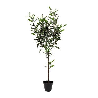 Saksı Bitki (57x43x108cm)